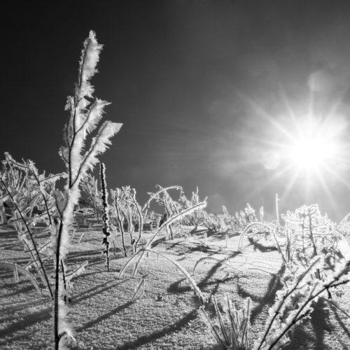 einige eingefrorenen pflanzen an einem schönen wintertag